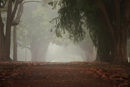 toowoomba: Queens park Toowoomba Australia foggy drizzel garden path background Stock Photo