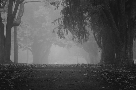 moody: Queens park Toowoomba Australia foggy drizzel garden path background Stock Photo