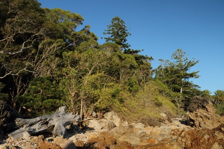 volcanic craggy rock beach with norfolk background Hillsborough national park queensland australia photo
