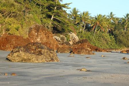 barrier island: volcanic craggy rock beach with norfolk background Hillsborough national park queensland australia