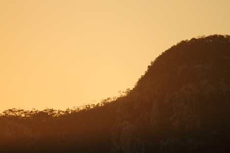 Mount oso eucalypt forest silhouette  cape Hillsborough  photo