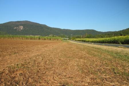 lejos: caña de azúcar en el capital del mundo Mackay región de North Queensland australia