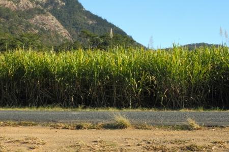 lejos: capital de la caña de azúcar del mundo, la región norte de Mackay Queensland Australia