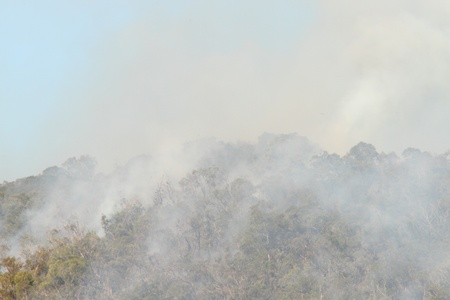 burning bush: bushfire smoke in national park a health risk to animals people and plants