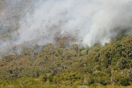 bushfire: bushfire smoke in national park a health risk to animals people and plants