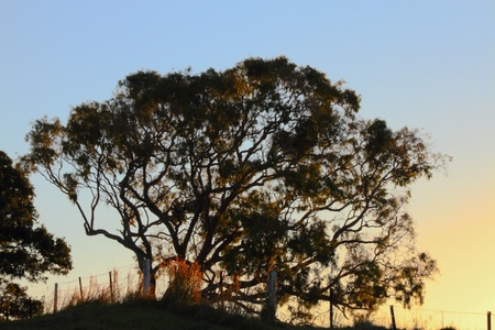 Rural typical australian gum tree farm scene in the wide bay burnett region of hervey bay photo