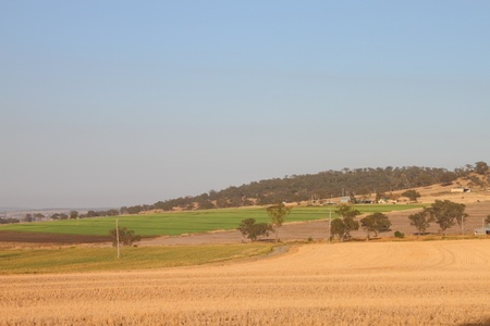 livestock feed crops on the darling downs region toowoomba queensland australia photo