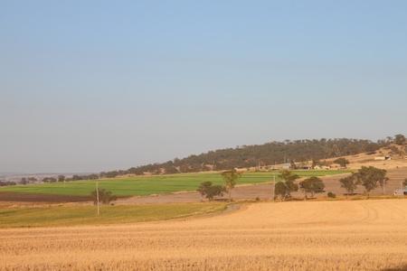 toowoomba: livestock feed crops on the darling downs region toowoomba queensland australia