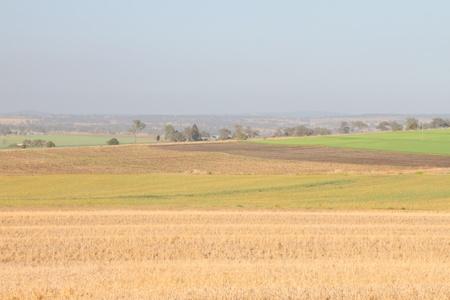 feedstock: livestock feed crops on the darling downs region toowoomba queensland australia