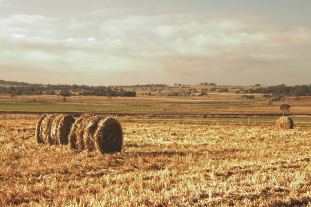 toowoomba: livestock feed crops and bales of hay on the darling downs region toowoomba queensland australia Stock Photo