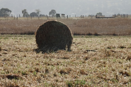 livestock feed crops and bales of hay on the darling downs region toowoomba queensland australia photo