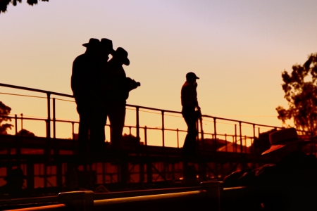 cattlemen at sale yards Toowoomba for cattle auction photo