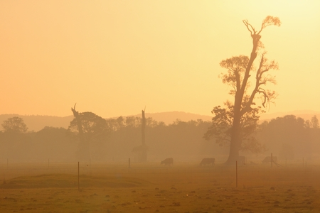 Bushfire smoke filled australian landscape of farm with gums and cows photo