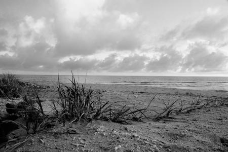 hervey bay whale watching beach background queensalnd australia in black and white photo