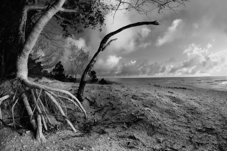 hervey bay whale watching beach tree  background queensalnd australia in black and white photo
