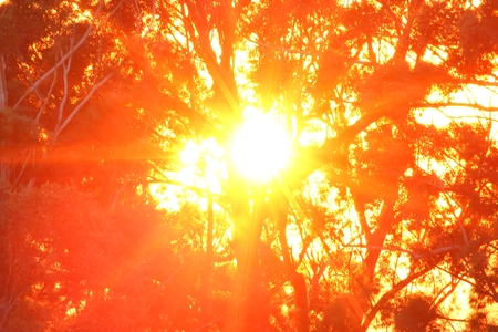 toowoomba: Australiana  gum tree background sunrise image toowoomba queensland, Stock Photo