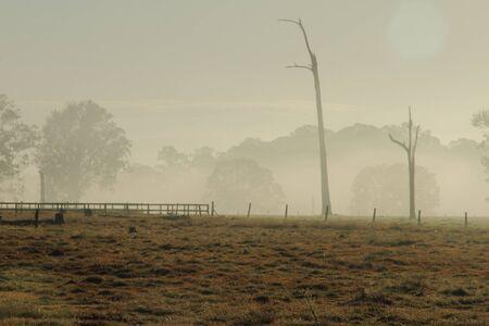shanti: early morning winter fog with sun flare rural australia Stock Photo
