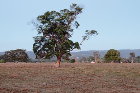 feature: Australian farm paddock background with tree feature