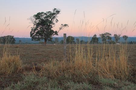 Australian farm paddock background with tree feature photo