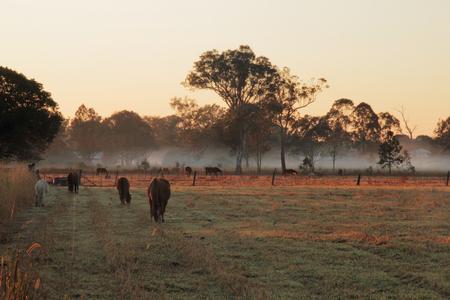 馬の農地の早朝の光、オーストラリア、クイーンズランド州 写真素材 - 30494608