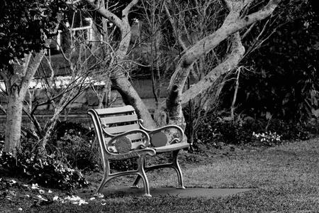toowoomba: park bench in laurel bank park vison imapred scented garden toowoomba