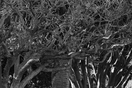 abstract tree background of laurel bank park vison imapred scented garden toowoomba  Stock Photo