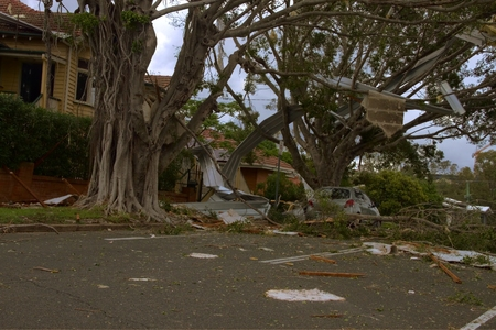 declared: BRISBANE, AUSTRALIA - NOVEMBER 28 : Roof littering tree from super cell hail storm area declared disaster on November 28, 2014 in Brisbane, Australia