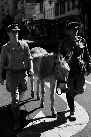 simpson: BRISBANE, AUSTRALIA - APRIL 25 : Simpson and his donkey  reenactors march along the route during Anzac day centenary commemorations April 25, 2015 in Brisbane, Australia