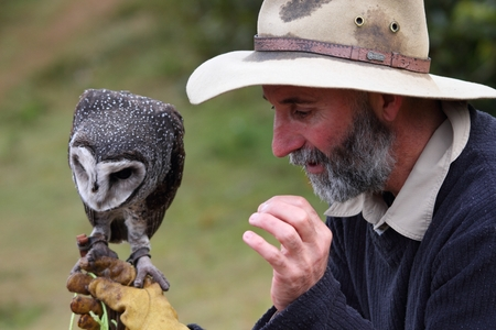 sooty: LAMINGTON GOLD COAST, AUSTRALIA - JULY 20 2015: Wildlife presentation at Oreillys Geusthouse showing the sooty barn owl July 20, 2015 in Lamington Gold Coast, Australia