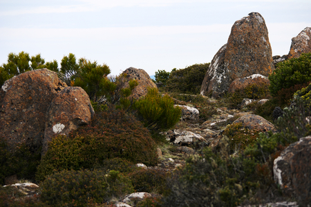 vegatation: Mount wellington in hobart a major tourist attraction for its unique landscape of rocks and alpine vegatation