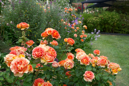 herbaceous: Tasmanian  Gardens herbaceous cottage garden area