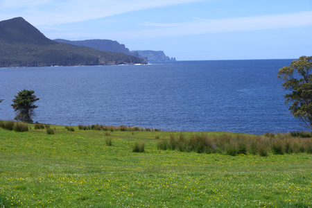 voted: wild flowers overlooking cape raoul tasmania voted top walk destination Stock Photo