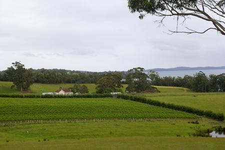 tasman: vineyard farm on tasman penisular