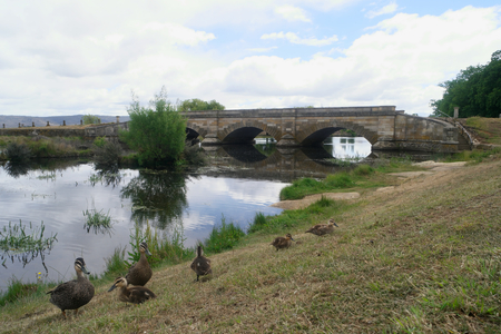 historic convict bridge in ross tasmania with spring ducks and ducklings Stock Photo