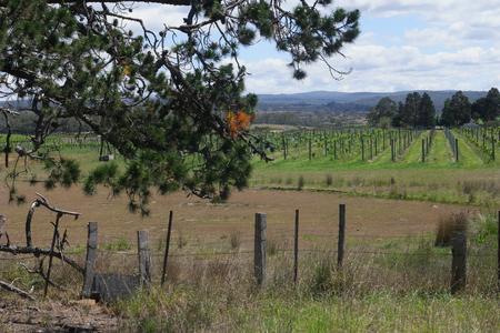 tasmania: cranbrook vineyard tasmania