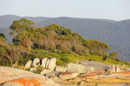 Bicheno famed for the red lichen rocks and penguins tasmania