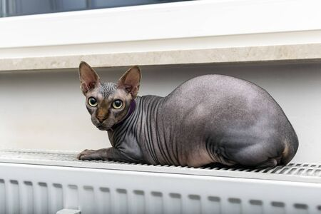 the cat lies on a heater under the window - horizontal photo