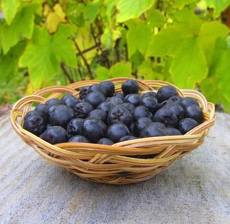 Ripe chokeberry in basket on green background, close-up Reklamní fotografie - 17191900