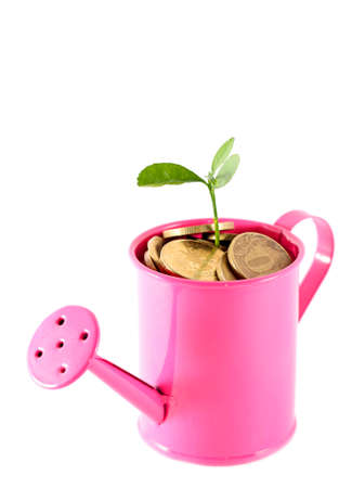 Idea of money tree - plant grows in pink watering can photo