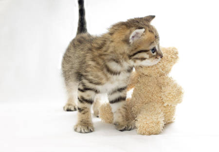 plush toy: Cute kitten and plush toy. Photo concept. Isolated on white
