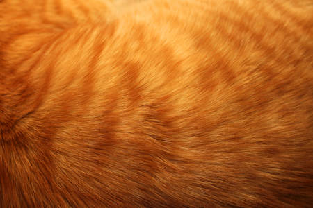Image of ginger cat's fur background