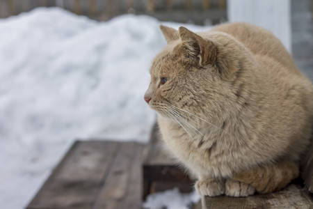 instinct: Image of homeless red tomcat sitting, close-up