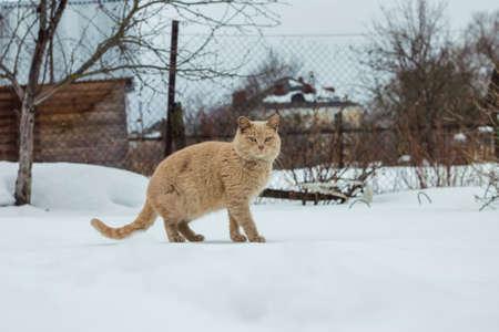 sneaks: March Cat sneaks on someone elses kitchen garden