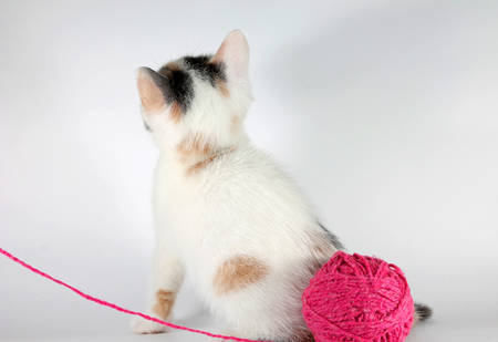 pink pussy: Image of little kitten not wants to play with yarn ball Stock Photo