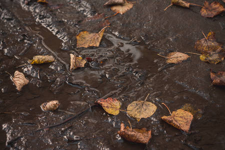 Autumn. Fallen leaves in a dirty puddle, close-up