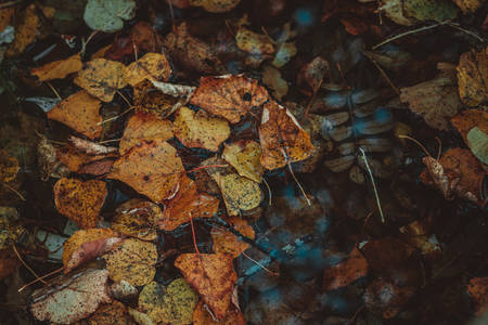 Concept of autumn depression. Fallen leaves in a puddle, close-up