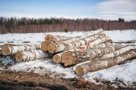 Timber extraction in winter. Photo of logs in snowy field Reklamní fotografie