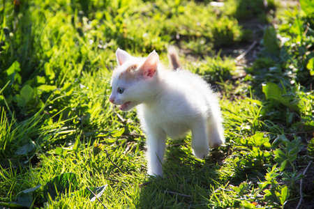 Animals. Outdoor photo of kitten cries, close-up