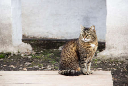 Image of severe cat sits against the wall Reklamní fotografie