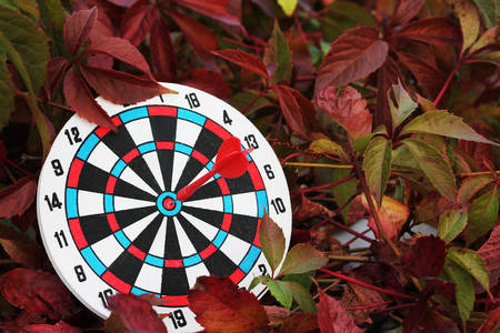 Success concept. Darts with Parthenocissus, close-up